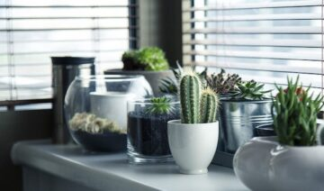 Plantas para decoração